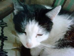 Katze Susi